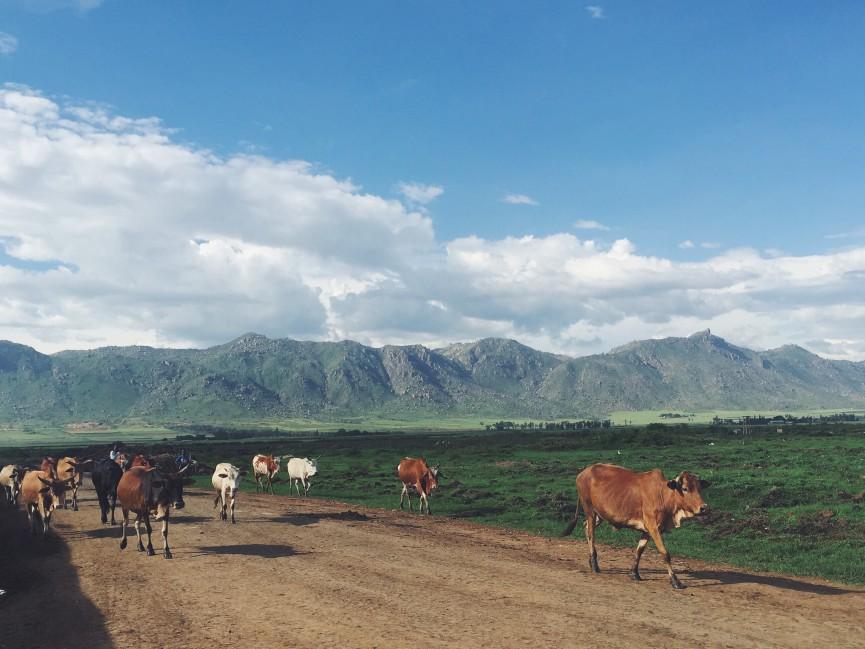 Kisumu farm land